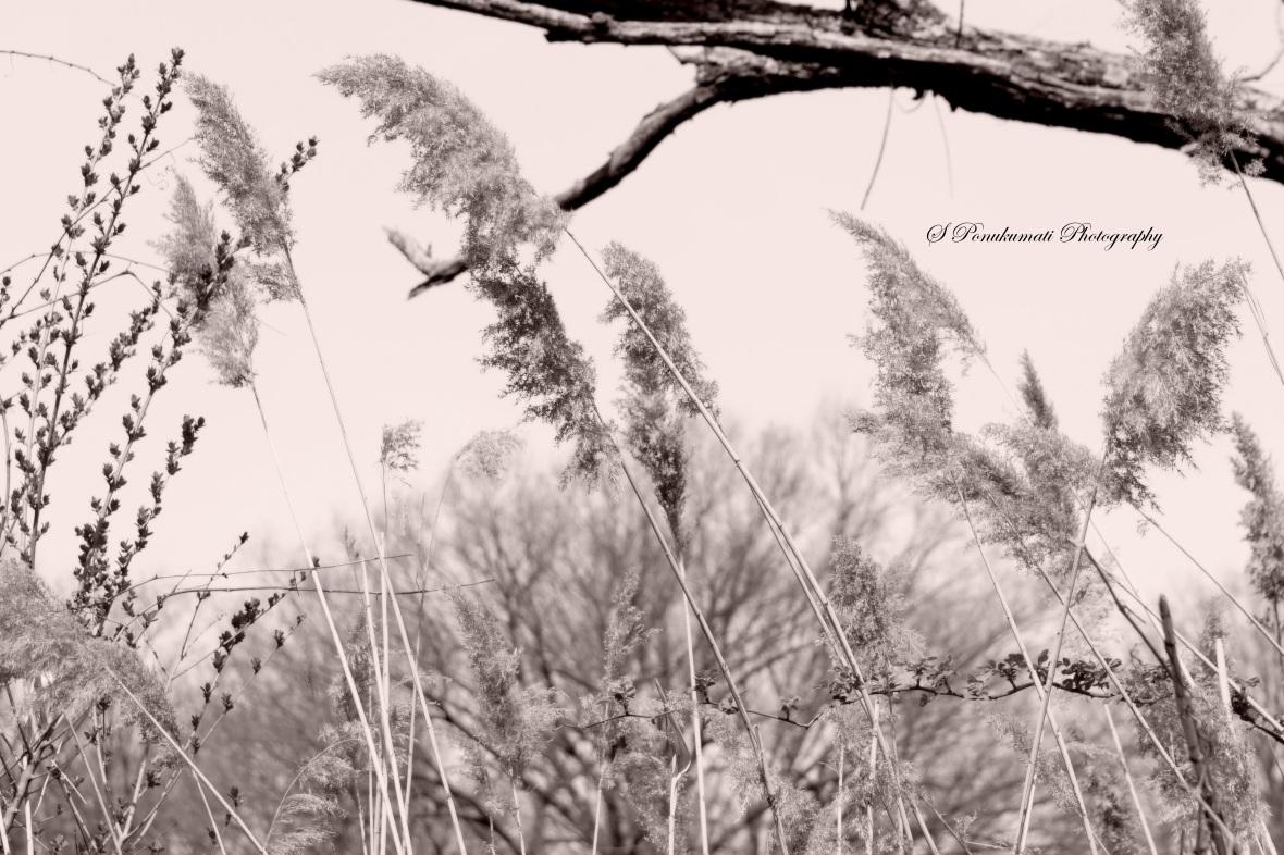 Grass Cherry blossoms Hari Grey color